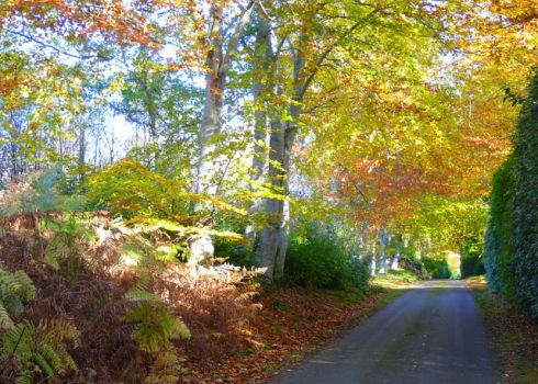 Dunrobin Castle driveway, Backies, Highland, Scotland.  Photo sylvia duckworth