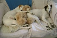 Three in the bed and the little one said . . . . .