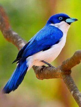 bird beauty...