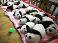 Panda Sanctuary - China