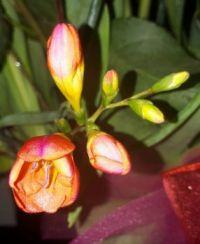 My favorite flower ...