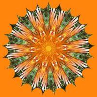 Orange Flowers 🌻