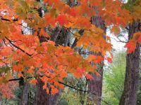 Autumn's Orange