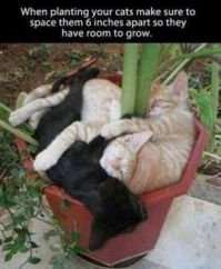Potted Kitties