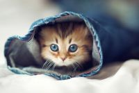 kitty-in-a-sleeve