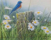 Bluebird and Daisies