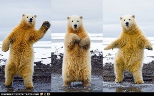 Peanut Butter shows us the three main steps that won him the Polar Bear Dance-off!