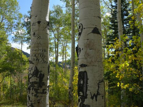 Aspen carvings