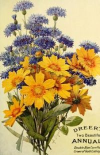 Themes Vintage ads - Seeds Catalog