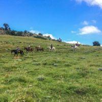 On horseback at Hogsback.