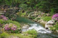 azalea along brook