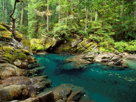 Ohanapecosh River Mt Rainier National Park Washington, USA