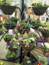 At the Garden Centre (5)