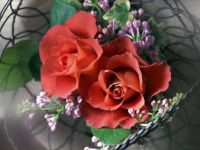Charm of roses