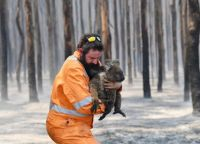 Saved koala