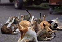 Cat Yoga Class