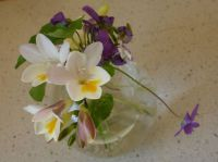 spring violets and freesias