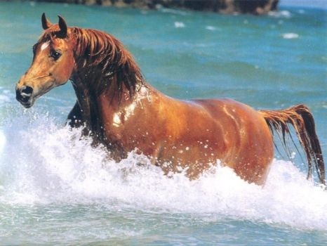 Horses_wallpapers_360