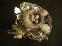 Nest of shells