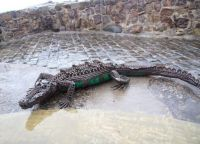 Scrap Metal Crocodile