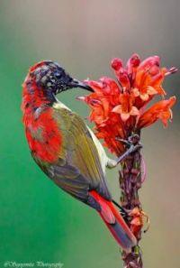 Sundbird