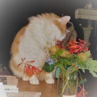 Alice loves flowers