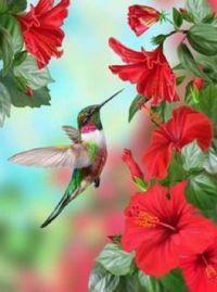 Beautiful Birds - No 48
