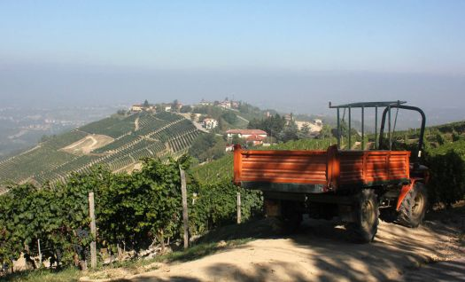 Hill top near Neive, Piemonte, Italy