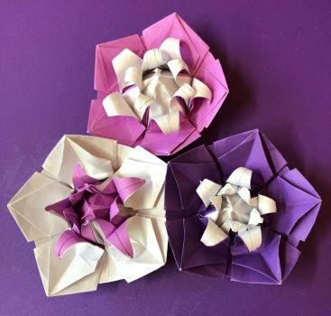 Origami Five petalled Flowers