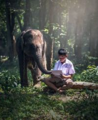 Man-Reading-to-the-Elephant