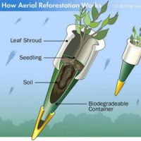 How Aerial Reforestation Works.