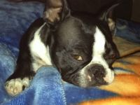 Grumpy Boston