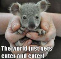 Tiny Baby Koala being held