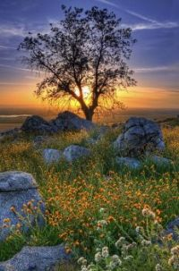 Another fantastic tree & photo...