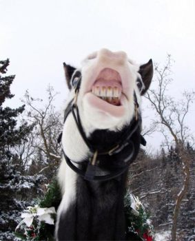 Horse Laugh - Whats the joke?