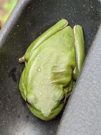 Frog Hiding in the Grill