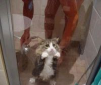how 2 wash a cat