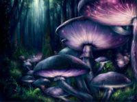 Shrooms by Bakenius (Medium)