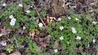 Spring Flowers in Tyresö