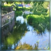 River Skerne 2