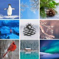 Winter - Medium