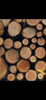 Pacific Northwest Logs