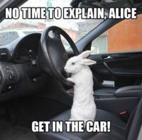 No time to explain, Alice