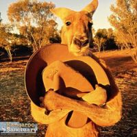 'Roger' with Brolga's hat, The Kangaroo Sanctuary, Alice Springs, Australia