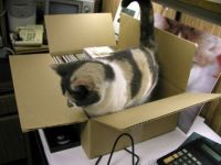 Callie never found a box she couldn't get into
