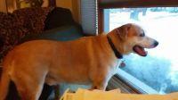 Sammy at Home