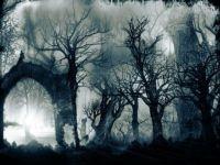 fog forest ;-)