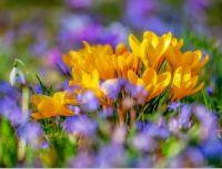 Jarní krása_Spring beauty