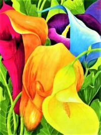 calla-lily-rainbow-janis-grau