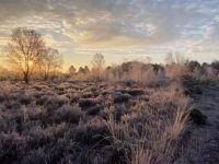 New Forrest Sunrise